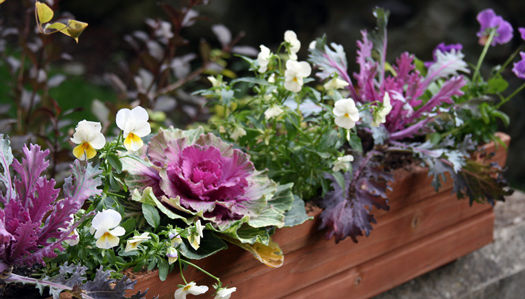Winter planter box