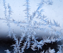 Cool Frost Crystals