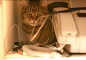 Behind the fax machine