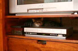 Sweetness behind the VCR / dvd player